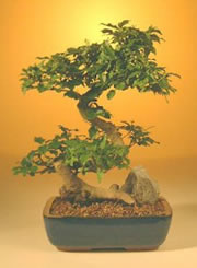 Tokonoma Japanese Bonsai Home Decoration Picture