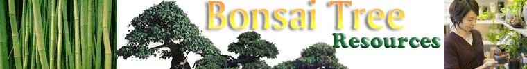 Bonsai Tree Header